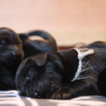 """Dream team"" litter has arrived!"