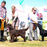 Great news from Druskininkai retriever speciality show!!
