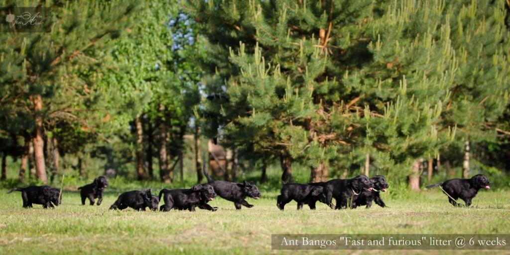 2014 m. balandžio 12 d. sulaukėme gražuolių juoduliukų.